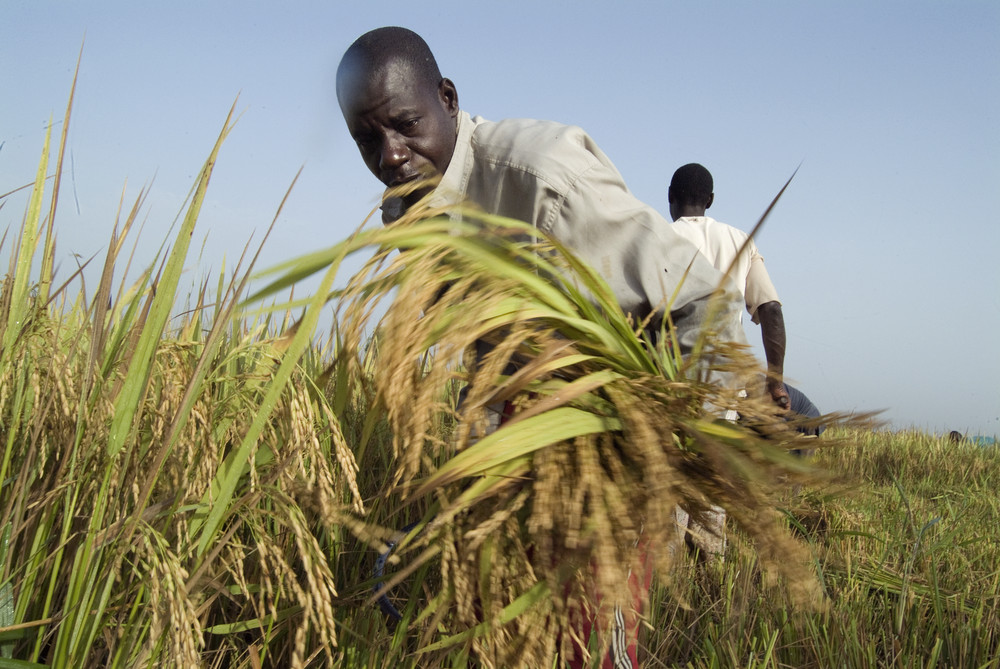 nduom assures farmers a better living condition